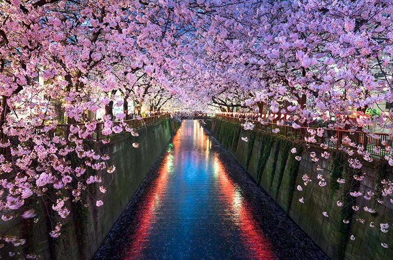 Río Meguro, Tokio, Japón