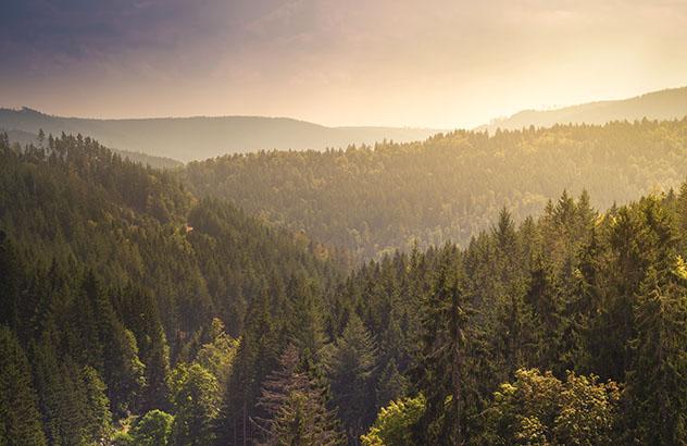 Selva Negra alemana: el amanecer