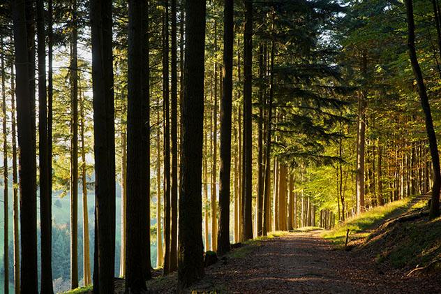Selva Negra alemana: cerca de Bollschweil