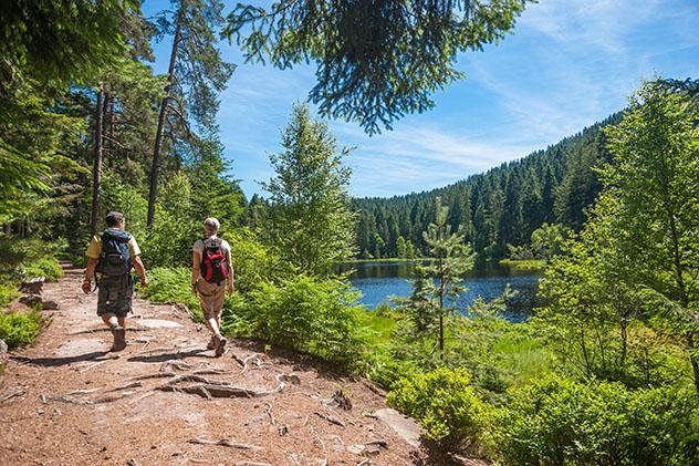 Selva Negra alemana: el Westweg