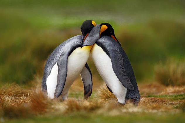 Antártida © Ondrej Prosicky / Shutterstock