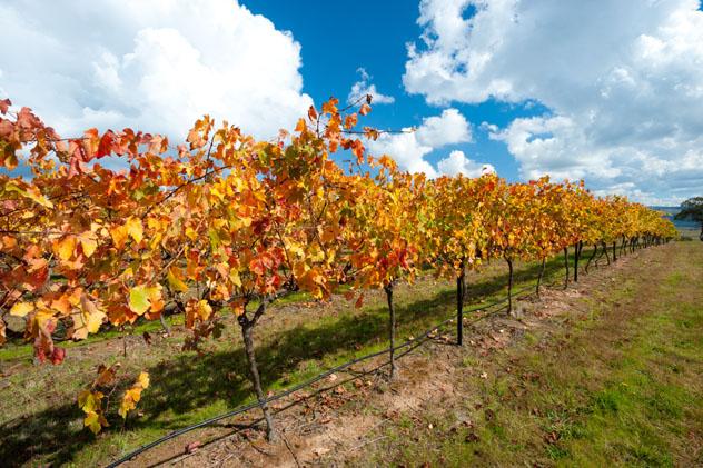 Región vínicola de Canberra, Australia © Chris Howey / Shutterstock