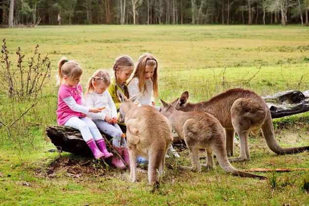 Canguros, Australia © Natalia Kirichenko / Shutterstock