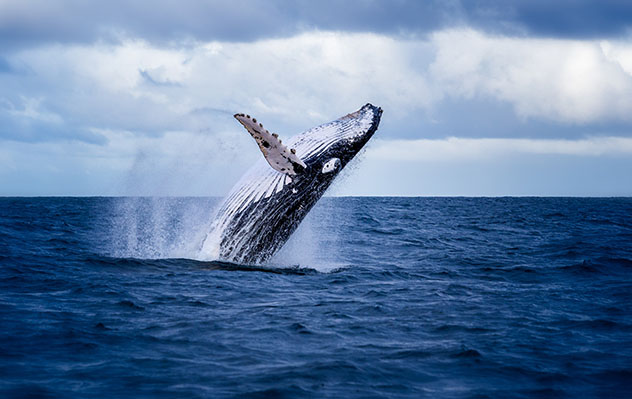 Ballenas en la costa de Margaret River, Australia Occidental, Top 01 de Best in Asia Pacific 2019, los 10 mejores destinos de Asia-Pacífico