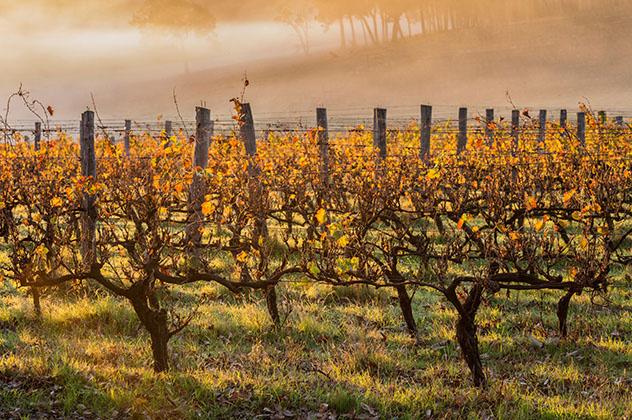 Si apetece tomar una copa de vino, Margaret River es el sitio ideal, Australia Occidental, Top 01 de Best in Asia Pacific 2019, los 10 mejores destinos de Asia-Pacífico