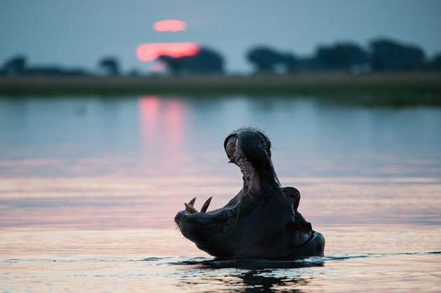 Delta del Okavango, Botsuana © Nicky Classen / Lonely Planet