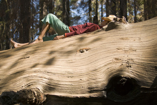 Sentir el terreno bajo los pies descalzos, tocar con las manos las texturas de las cortezas de los árboles y recibir el calor del sol son elementos de la terapia de bosques, Costa Norte, California© Doug Marshall / Getty Images