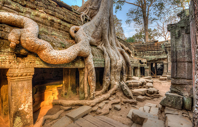 Templo Ta Prohm, Angkor, Siem Reap, Camboya © Tim Pryce / Shutterstock