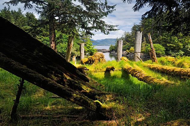 Árboles de Haida Gwaii, Columbia Británica, Canadá