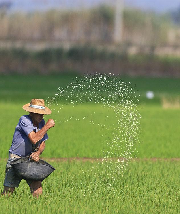 Catalunya meridional: arrozales en Delta de l'Ebre