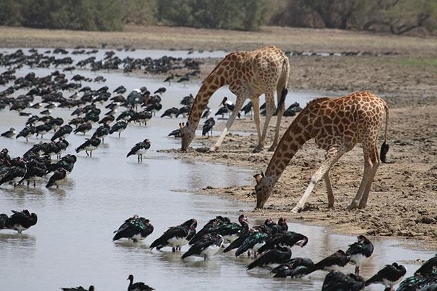 Parque Nacional de Zakouma, Chad © Thomas Clode / Shutterstock