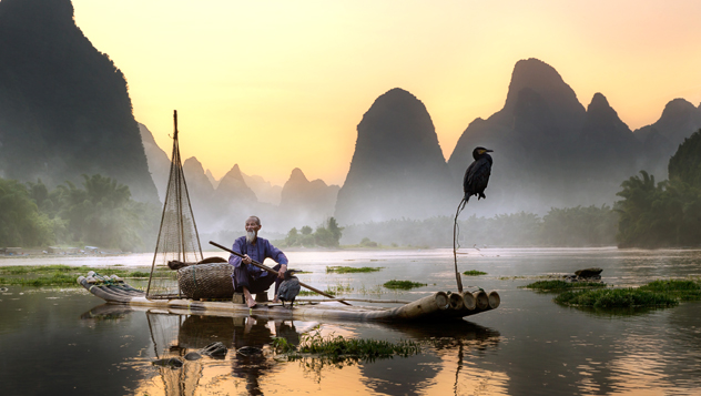 La antigua práctica de la pesca con cormoranes (el ave caza pescados tan grandes que no puede tragárselos) sigue vigente en algunas partes de China © Pacmanfrog Photo / Moment RF / Getty Images