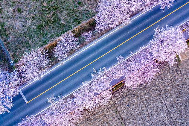 Corea del Sur: carretera a Gyeongju