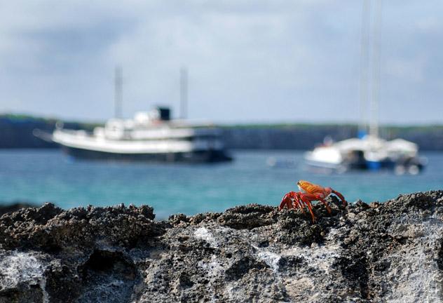 Crucero, Islas Galápagos, Ecuador © Kevin Alvey / EyeEm / Getty Images