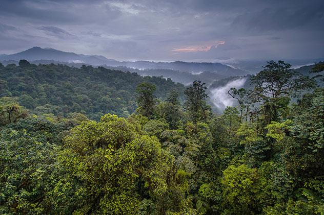 Vistas desde Mashpi Lodge sobre su reserva de selva pluvial, Ecuador © Philip Lee Harvey / Lonely Planet