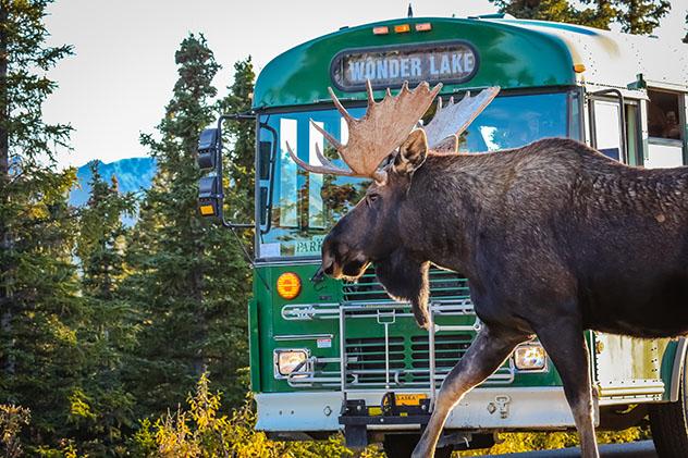 Parque Nacional Denali, Alaska, EE UU: película Hacia rutas salvajes