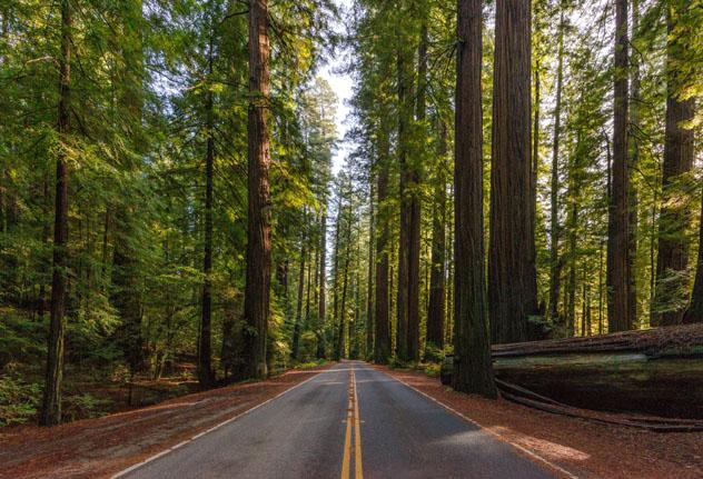 Avenida de los Gigantes, California, costa del Pacífico, EE UU © Noppawat Tom Charoensinphon / Getty Images