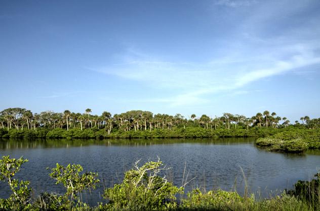El Merritt Island Wildlife Refuge alberga a 1500 especies entre sus extensos pantanos y bosques caducifolios, costa espacial de Florida, EE UU © Dosecreative / Getty Images