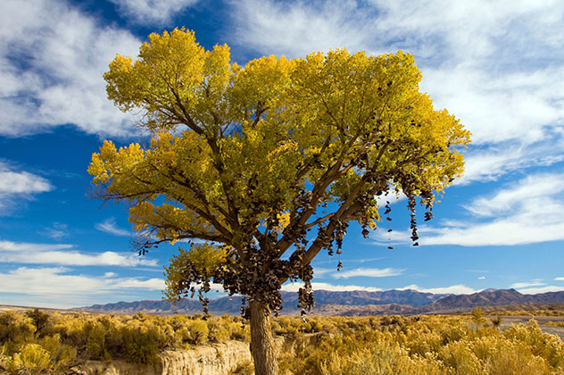 El Árbol de Zapatos, Nevada, Estados Unidos