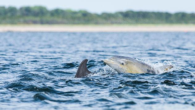 Tierras Altas de Escocia (Highlands): delfines de Inverness