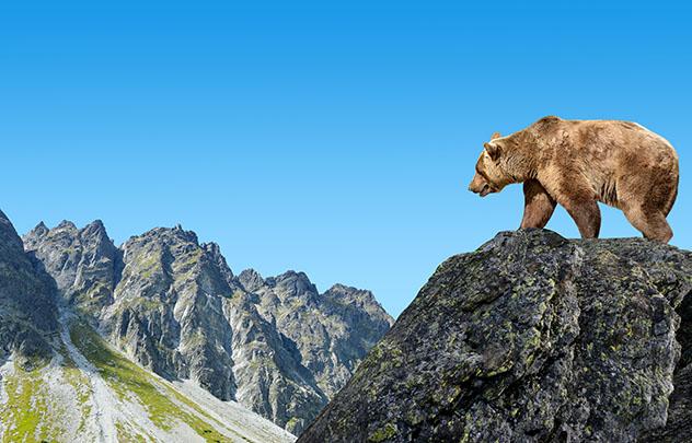 Los visitantes del Alto Tatra tienen muchas probabilidades de avistar a un oso pardo si van en compañía de un guía experimentado, Eslovaquia © Vaclav Volrab / Shutterstock