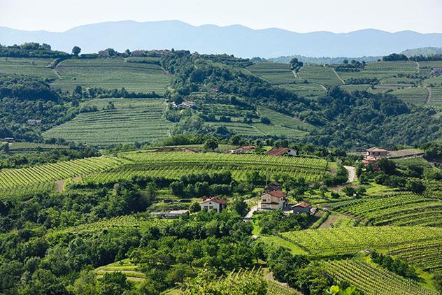 Eslovenia vinos: viñedos del Goriška Brda