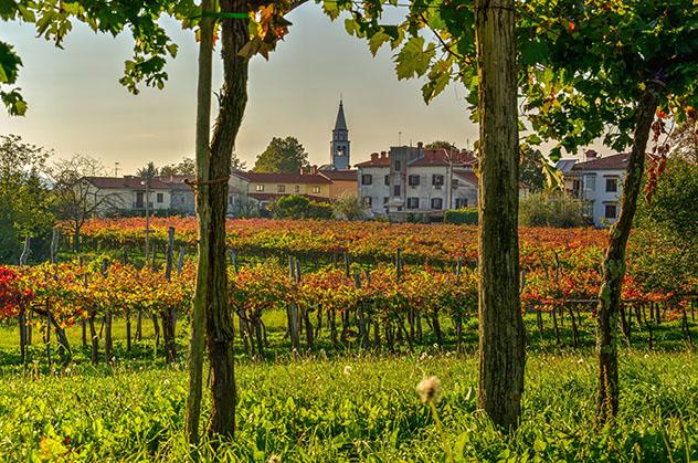 Eslovenia vinos: viñedos de la región del Karst