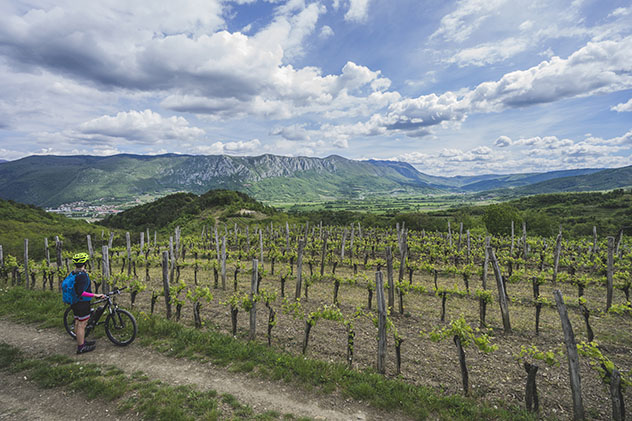 Eslovenia vinos: bicicleta por los viñedos