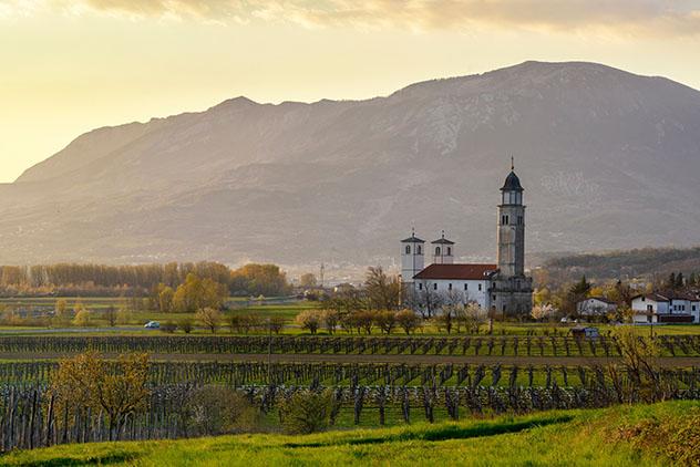 Eslovenia: viñedos en el valle de Vipava