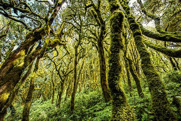 Parque Nacional de Garajonay, La Gomera, Canarias, España © RossHelen / Shuttersetock