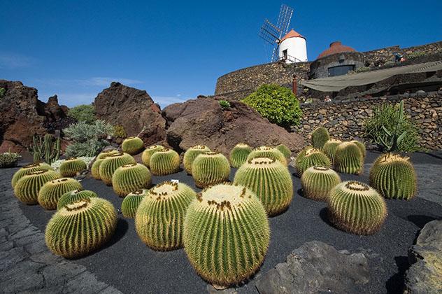 Guatiza, Lanzarote, Canarias, España © Mariusz witulski / Shutterstock