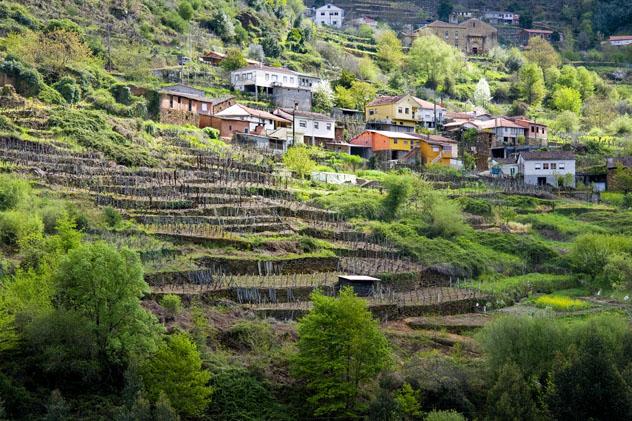 Viñedos en Orense, Galicia, España © carballo / Shutterstock