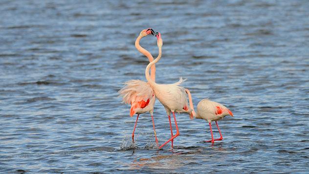 Flamencos en las marismas del Parque Nacional de Doñana, Huelva, España © Klaas Vledder / Shutterstock