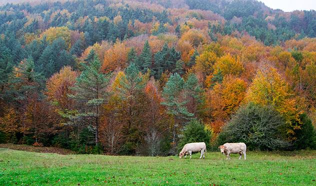 Valle del Roncal, Navarra, España