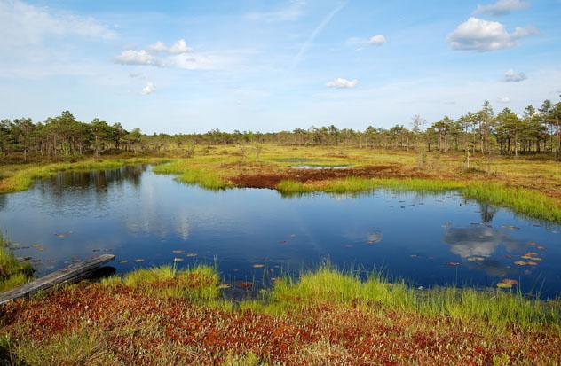 Parque Nacional de Sooma, Estonia © kawhia / Shutterstock