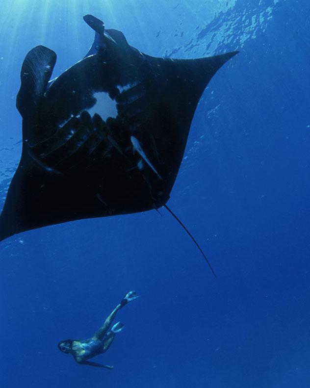 Nadando con una manta en Fiyi, Top 07 de Best in Asia Pacific 2019, los 10 mejores destinos de Asia-Pacífico