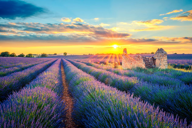 Puesta del sol en un campo de lavanda de Valensole, en la Provenza, Francia © prochasson frederic / Shutterstock