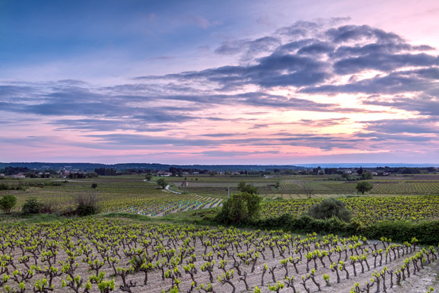 Viñedos de la Provenza, Francia © Troy Wegman / Shutterstock