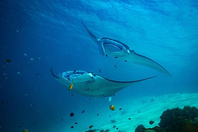 Las mantarrayas son unas de las muchas criaturas marinas que viven en el Parque Nacional de Komodo, Indonesia © sergemi / Shutterstock