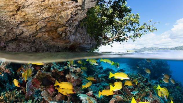 Raja Ampat, el sueño de todo submarinista, Indonesia © ifish / Getty Images
