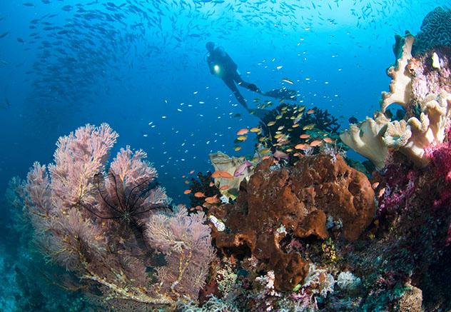 Aventuras en Indonesia: submarinismo en Raja Ampat
