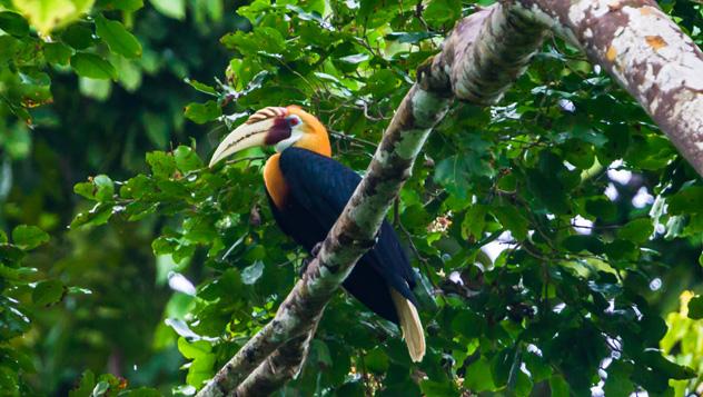 Raja Ampat también tiene muchas criaturas en tierra firme, indonesia © Marius Dobilas / Shutterstock