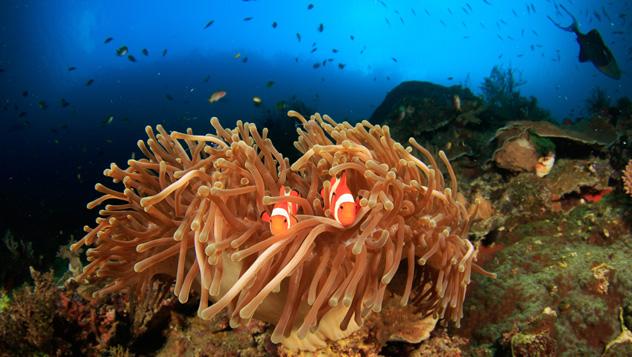 En los arrecifes de coral de Raja Ampat viven criaturas grandes y pequeñas, Indonesia © SergeUWPhoto / Shutterstock