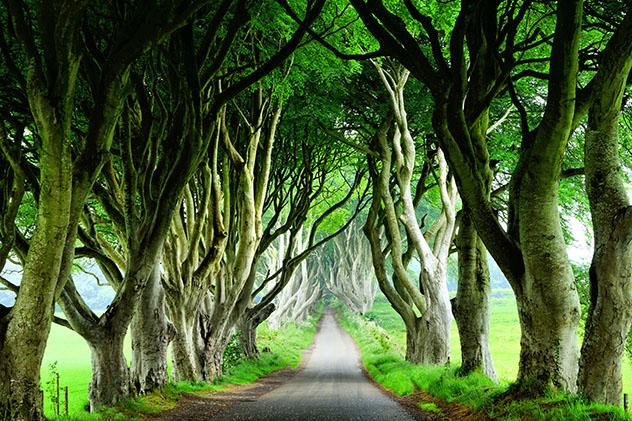 Dark Heges, en el Condado Antrim, Irland del Norte