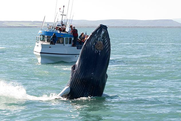 Húsavík es uno de los mejores sitios de Islandia para ver ballenas, Arctic Coast Way, Islandia © Tatonka / Shutterstock