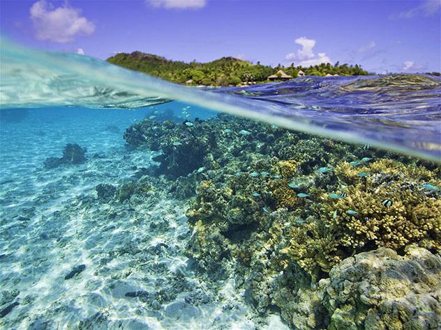 Arrecife de coral de Rarotonga, Islas Cook, Top 05 de Best in Asia Pacific 2019, los 10 mejores destinos de Asia-Pacífico