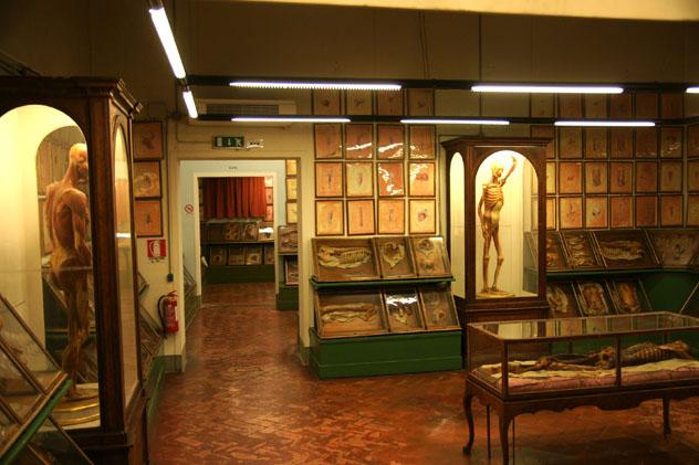 Museo La Specola, Florencia, Italia © romana klee / Flickr