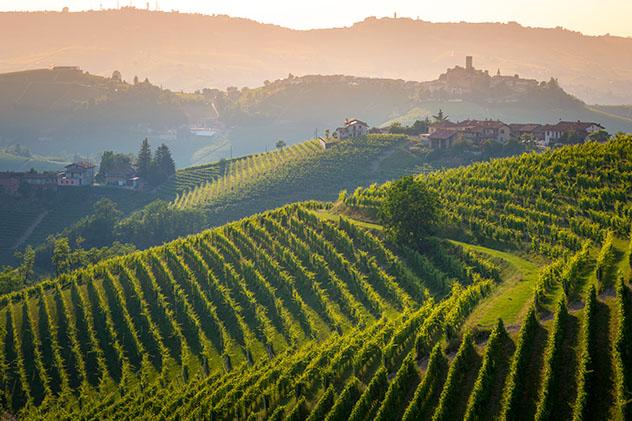 Las suaves colinas de la región de las Langhe están cubiertas de viñedos, Piamonte, Italia © ronnybas frimages / Shutterstock