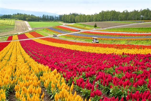 Biei, Hokkaido, Japón © Niradj / Shutterstock