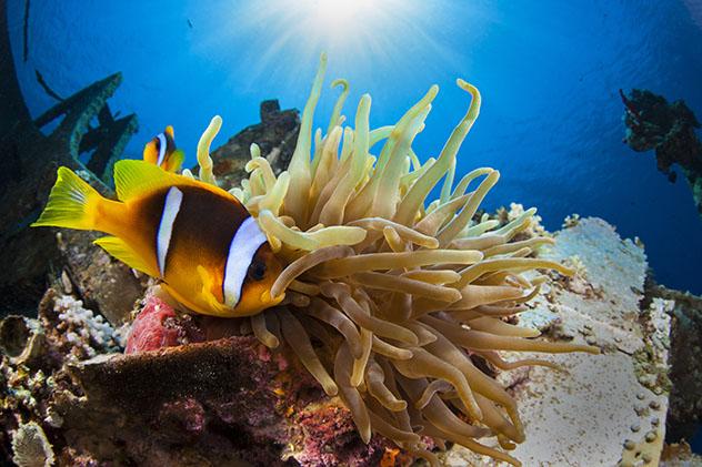 El breve tramo de la costa del mar Rojo de Jordania es excelente para el buceo con tubo y el submarinismo © Shahar Shabtai / Shutterstock